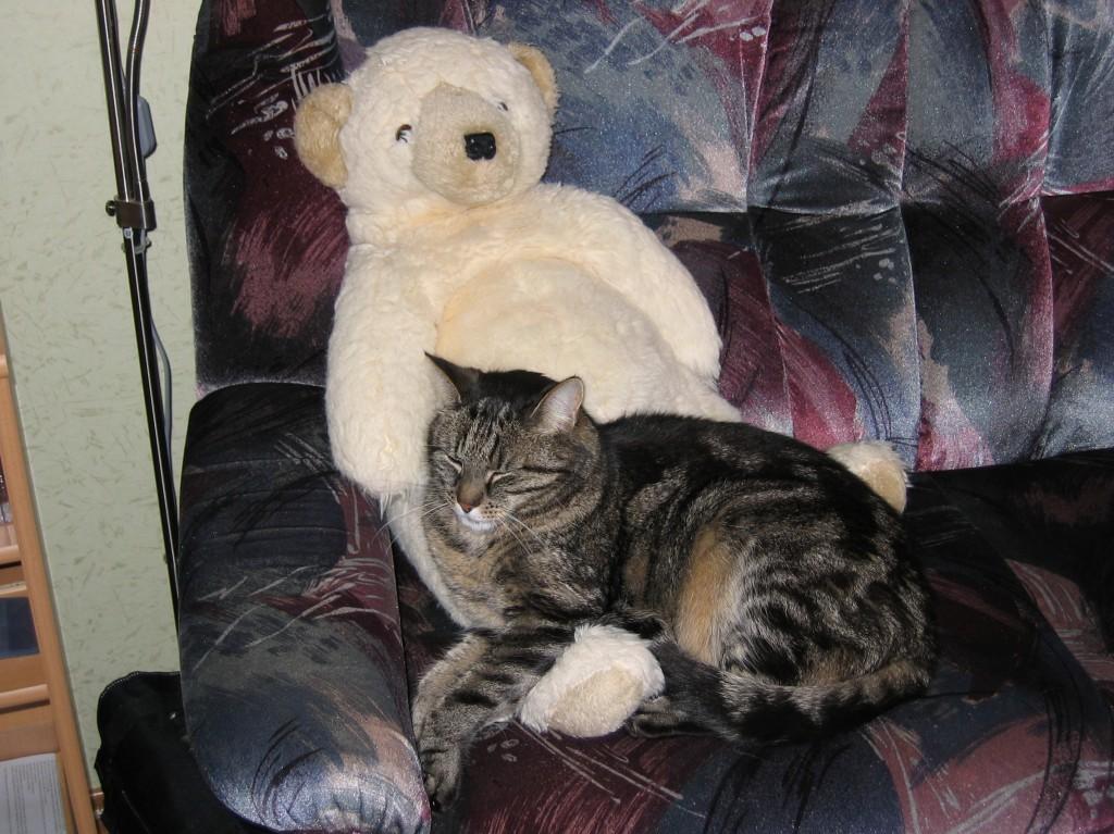 CArlo bewacht den Zottelbären