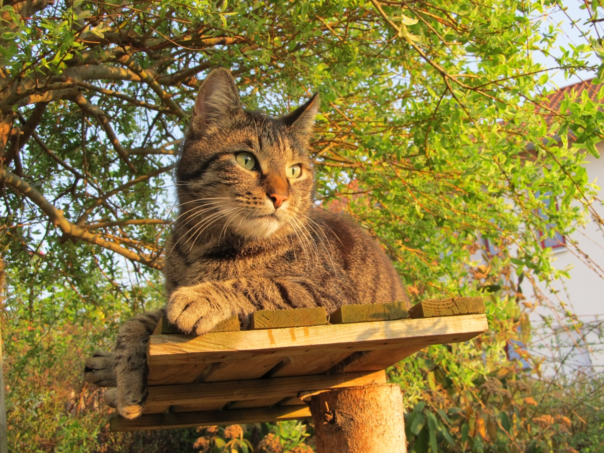 Chico bewcht den Garten