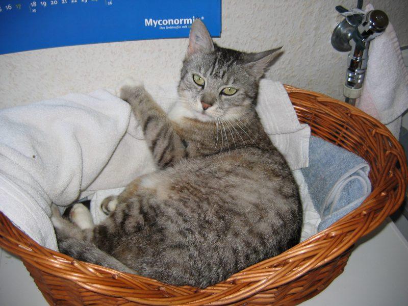 Sadie liebte den Platz auf der Waschmaschine