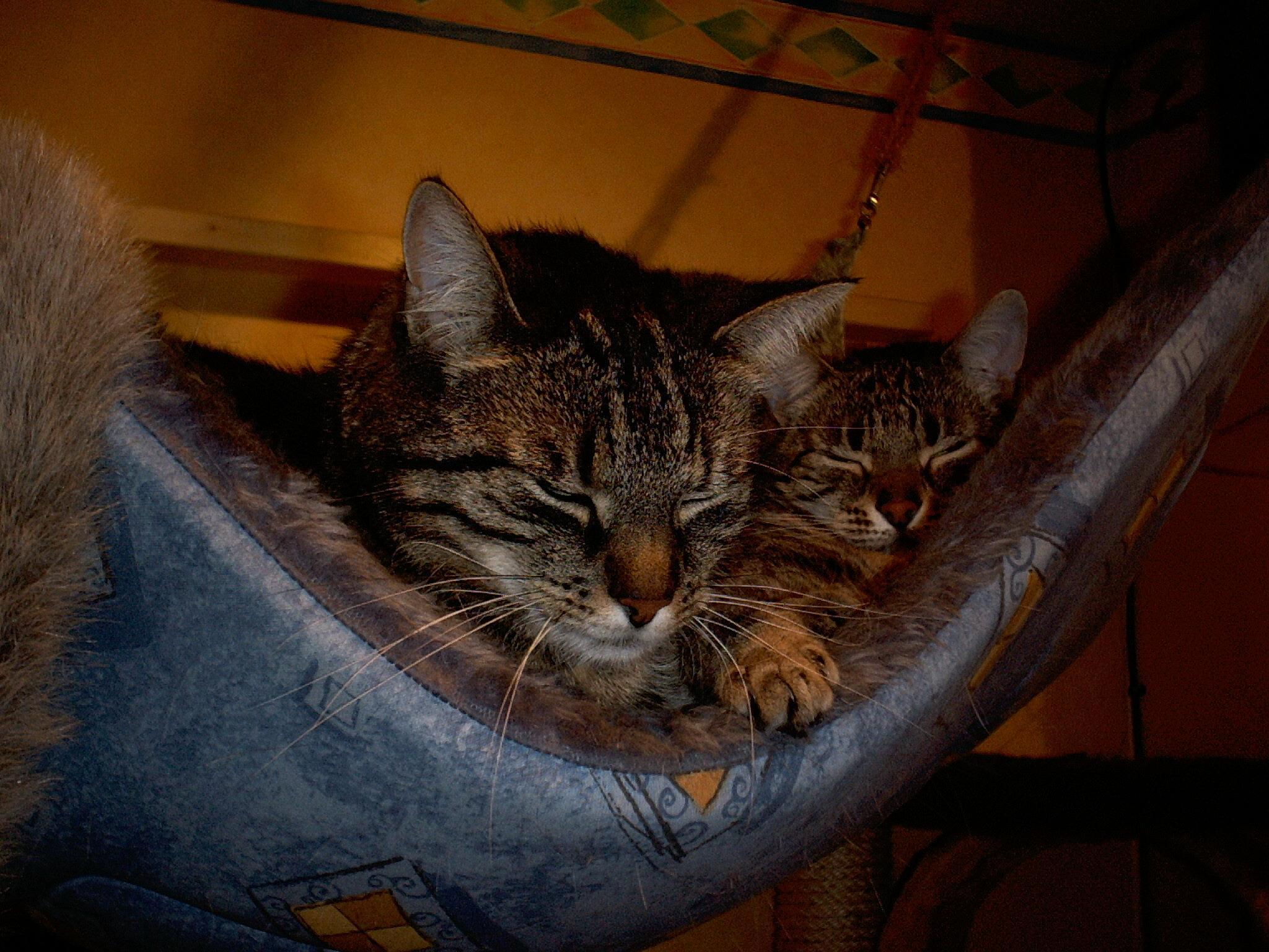 Carlo und Tina in ihrer Hängematte unter der Decke