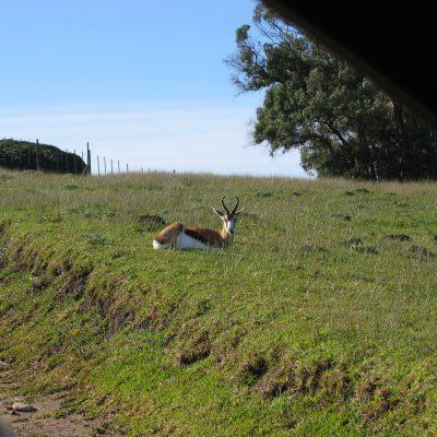 Die Einfahrt zum Gamepark, die Antilope sieht keine Feinde in der Nähe