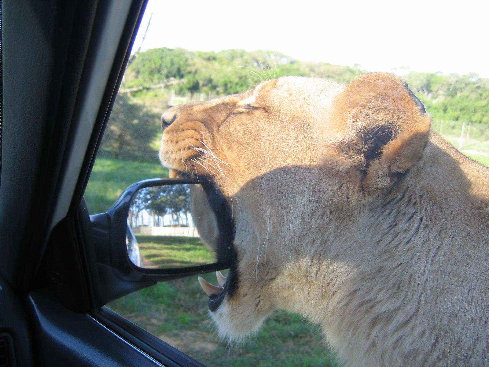 NULL Problem, den Spiegel ins Maul zu nehmen!