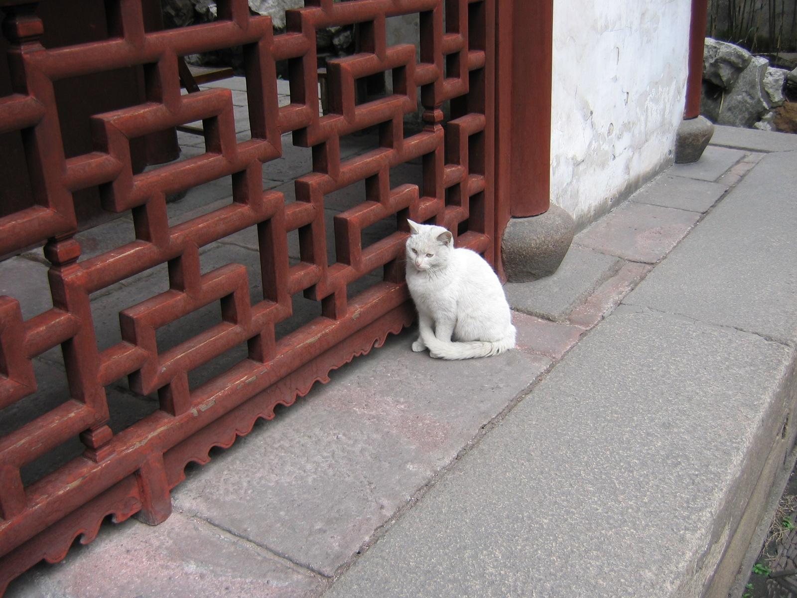 Die Katze saß da, als bewachte sie ...
