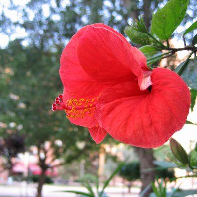 Wunderschöne Blumen