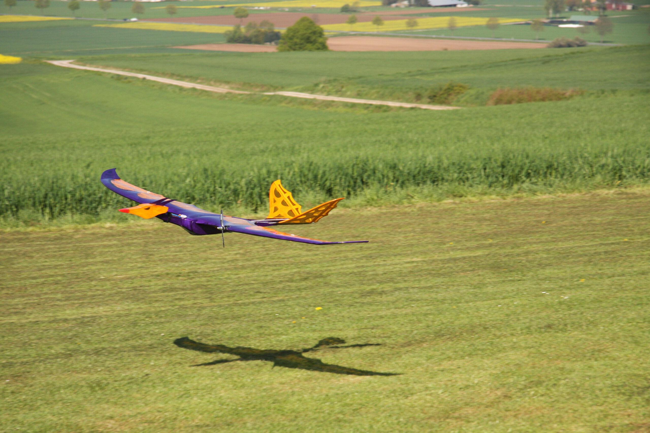 im tirfen Überflug verfolgt ihn sein Schatten