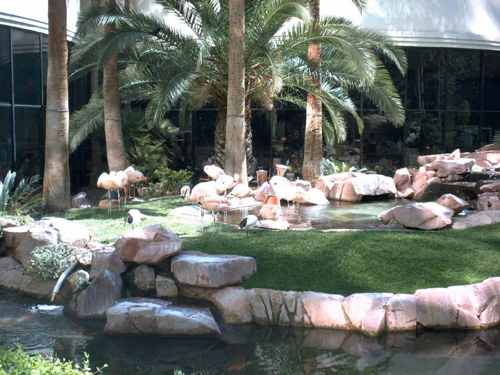 Der Blick aus dem Frühstücksraum unseres Hotels Hilton at the Flamingo