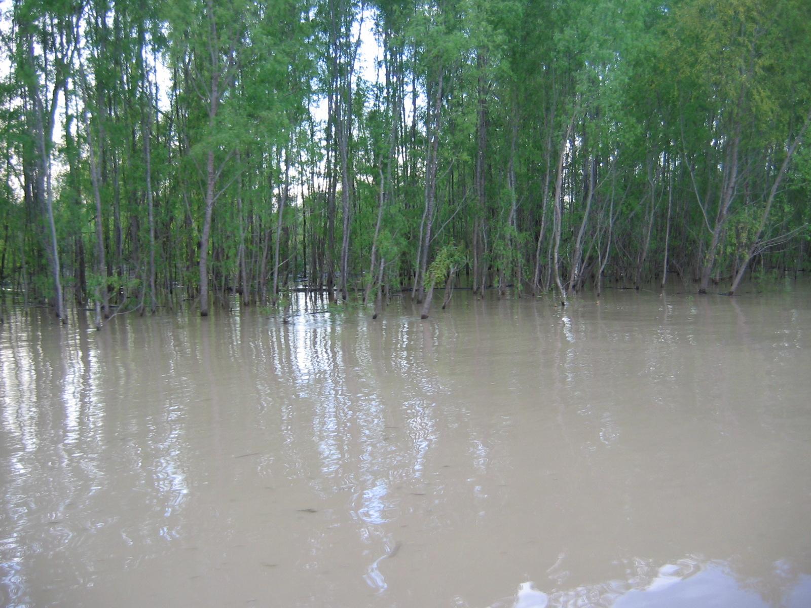 Ein Stück den Yazoo River hoch, bevor es auf den Mississippi ging
